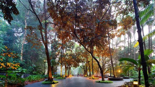 أفضل 7 أنشطة في حديقة سنغافورة النباتية | الحديقه النباتية الرائعه فى سنغافورة