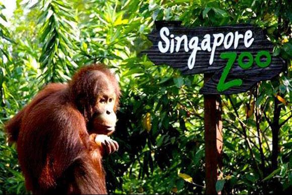 أفضل 8 أنشطة في حديقة نايت سفاري في سنغافورة