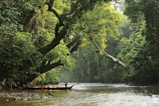 افضل المنتزهات و المحميات الوطنية في ماليزيا