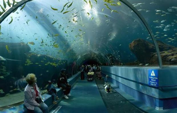 أفضل 5 أنشطة في عالم تحت الماء لنكاوي