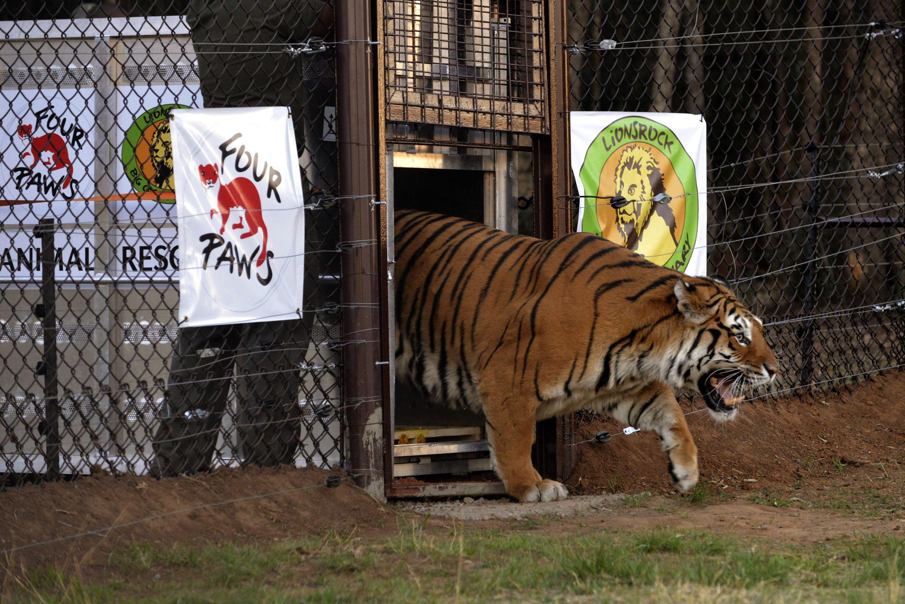 الانشطه الترفيهيه فى حديقة حيوان سريراتشا تايغر تايلاند | سريراتشا تايغر تايلاند