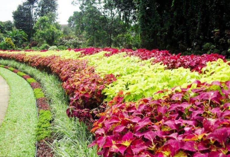 أهم أنشطة في حديقة فكتوريا نوراليا سريلانكا