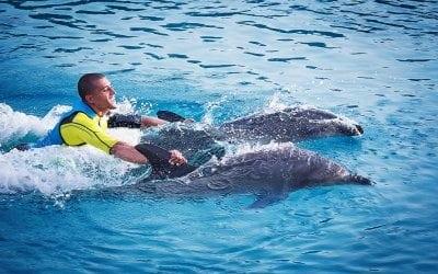 أكتشف خليج الدلافين في دبي