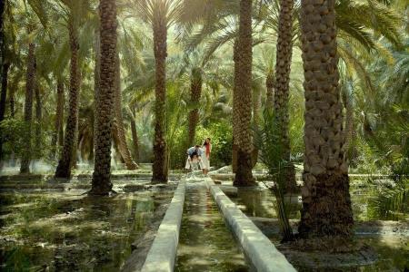 أنشطة في واحة العين أبو ظبي