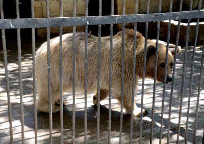 حديقة حيوان باكو |الانشطه السياحية والترفيهيه فى حديقة حيوان باكو اذريبجان