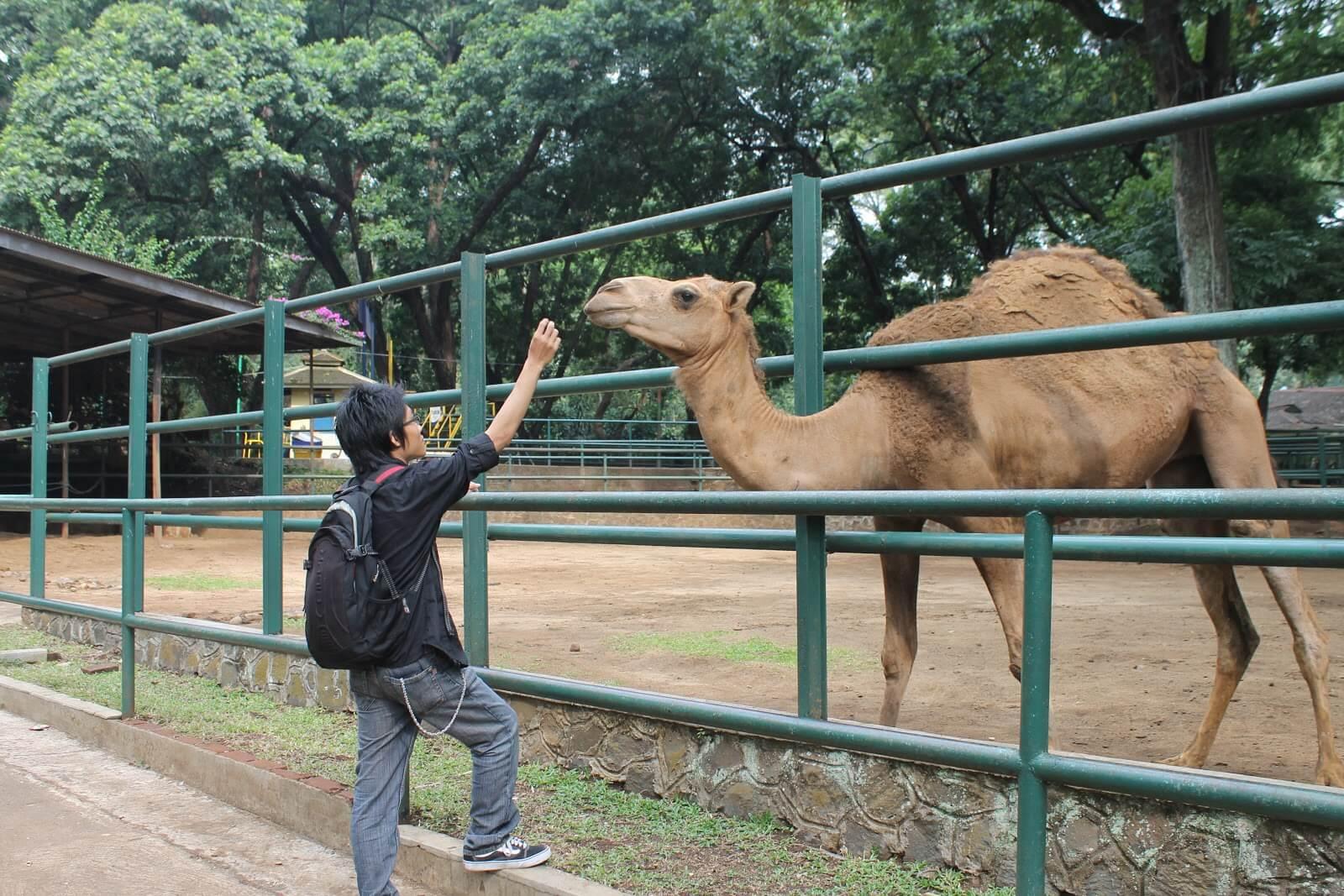 حديقة جيابلام اندونيسيا
