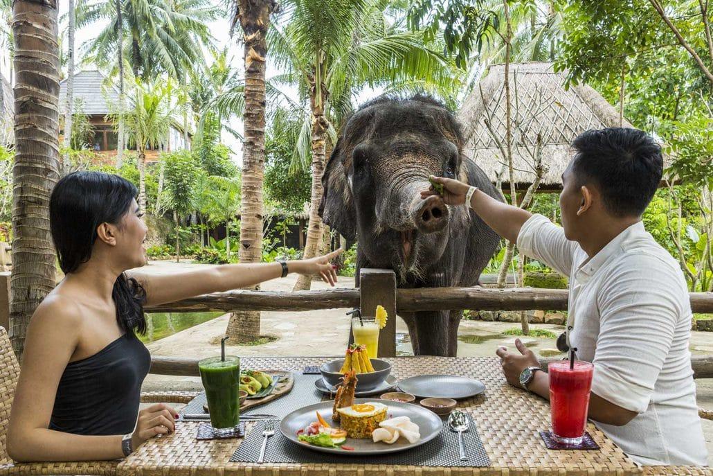 حديقة الفيلة في لومبوك