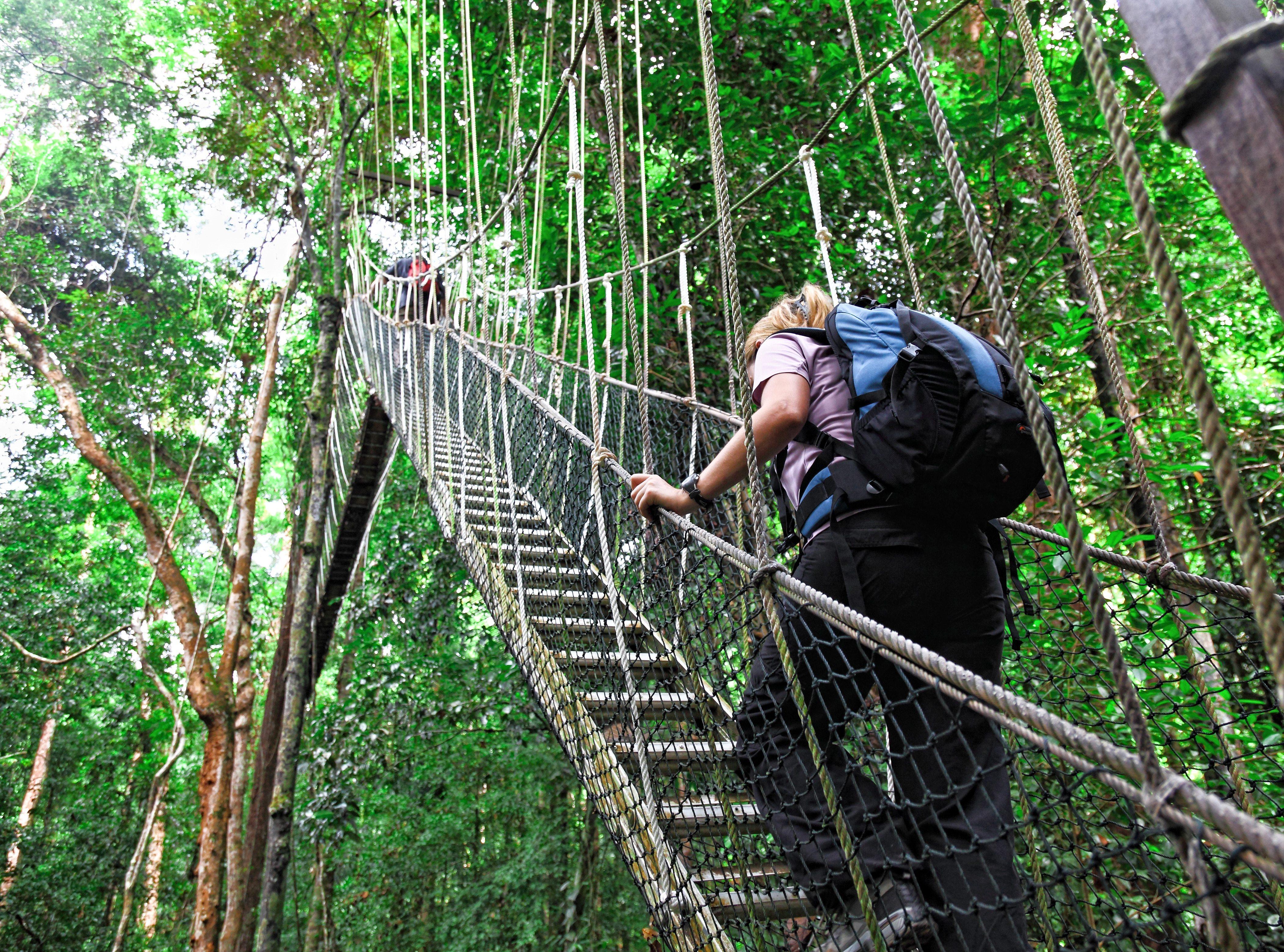 ممشى قمة الشجرة في ماليزيا