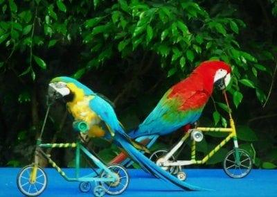 حديقة حيوانات شنغماي