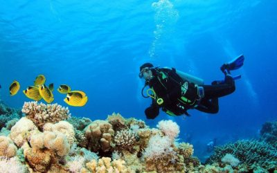 Lawatan di bawah air di Dubai