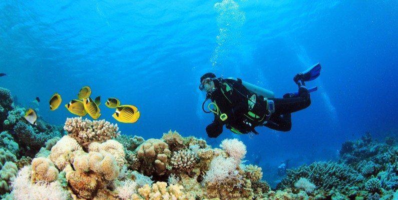جولة تحت الماء في دبي