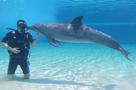 خليج الدولفين