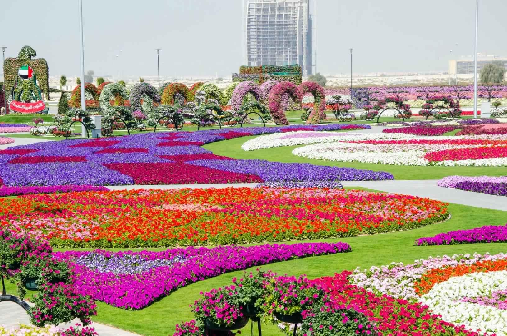 dubai_miracle_garden_1