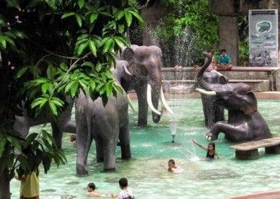 افضل الانشطه فى حديقه الحيوانات دوسيت التى توجد فى  بانكوك فى تايلاند
