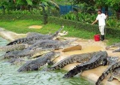 حديقة التماسيح لنكاوي ماليزيا