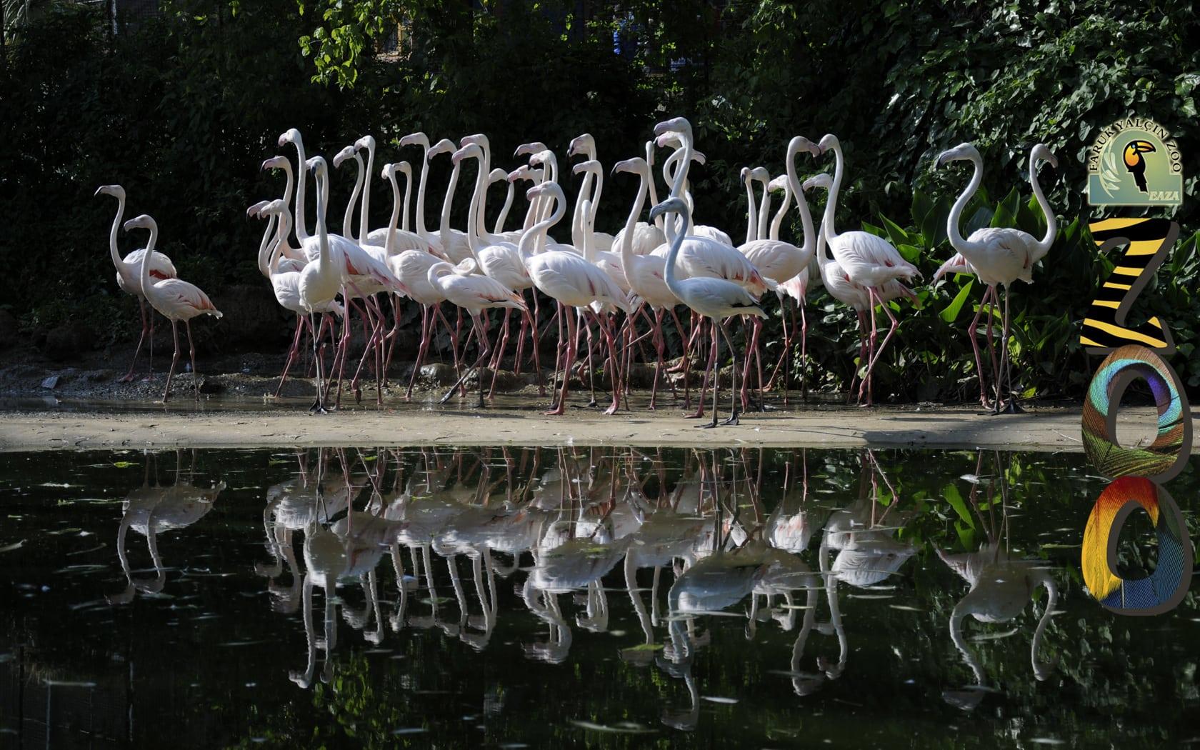 اهم الانشطة الترفيهيه فى حديقة الحيوانات تركيا | حديقة الحيوانات فى تركيا