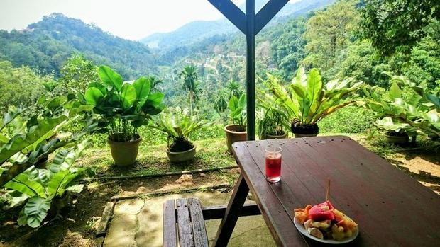افضل 3 أنشطة في حديقة الفواكه في بينانج ماليزيا