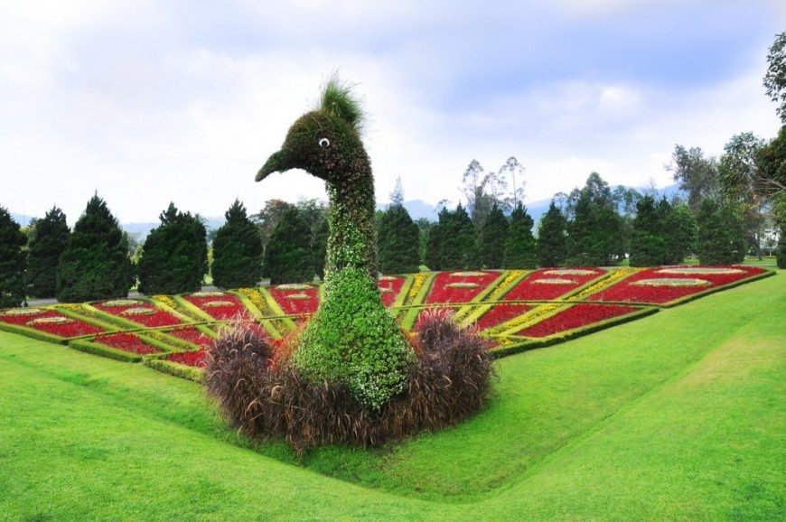 الأنشطة الترفيهية في حديقة الزهور بونشاك اندونيسيا