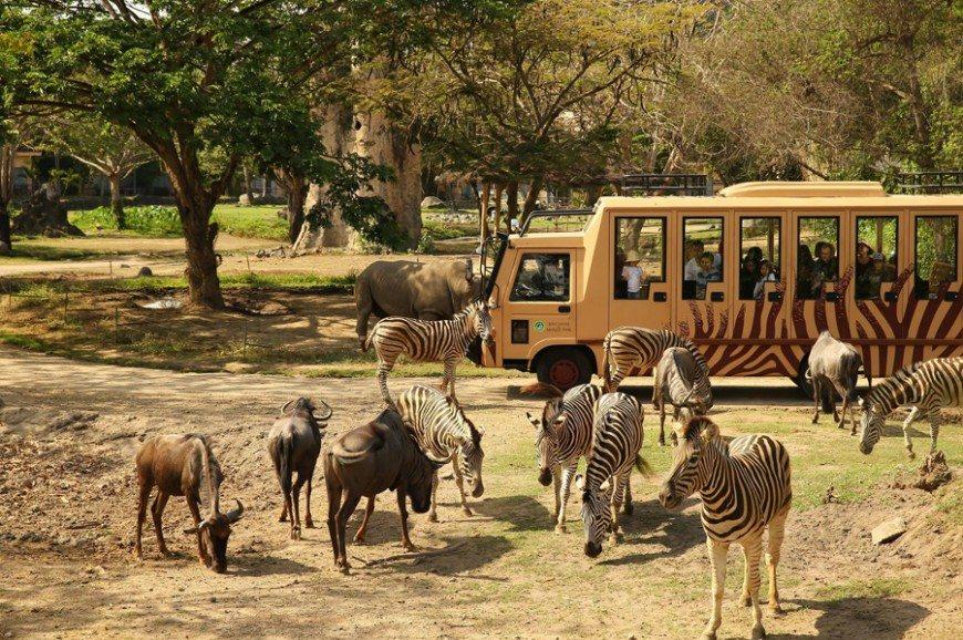 حديقة الحيوان في بالي اندونيسيا