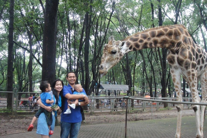 gallery_ragunan-2-حديقة راجوانا جاكرتا اندونيسيا