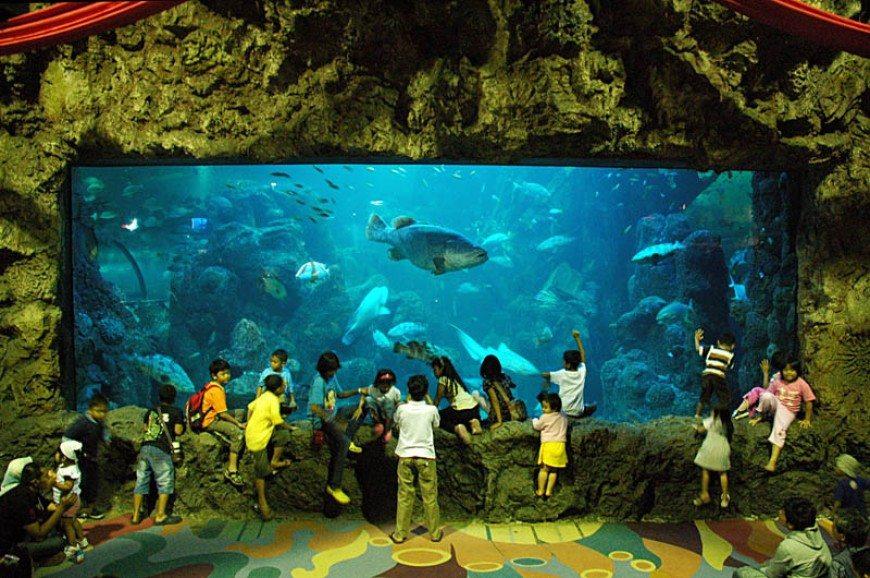 عالم البحار جاكرتا اندونيسيا