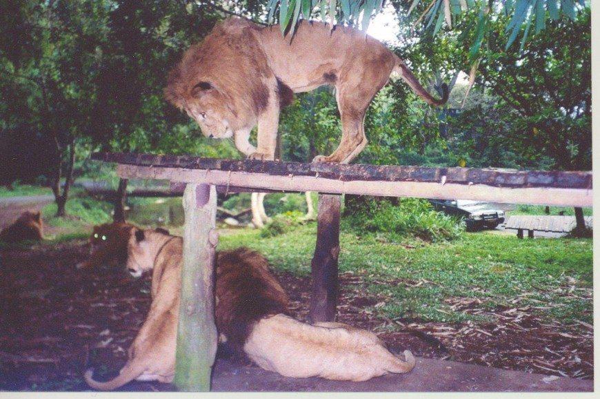 رحديقة سفاري بونشاك اندونيسيا