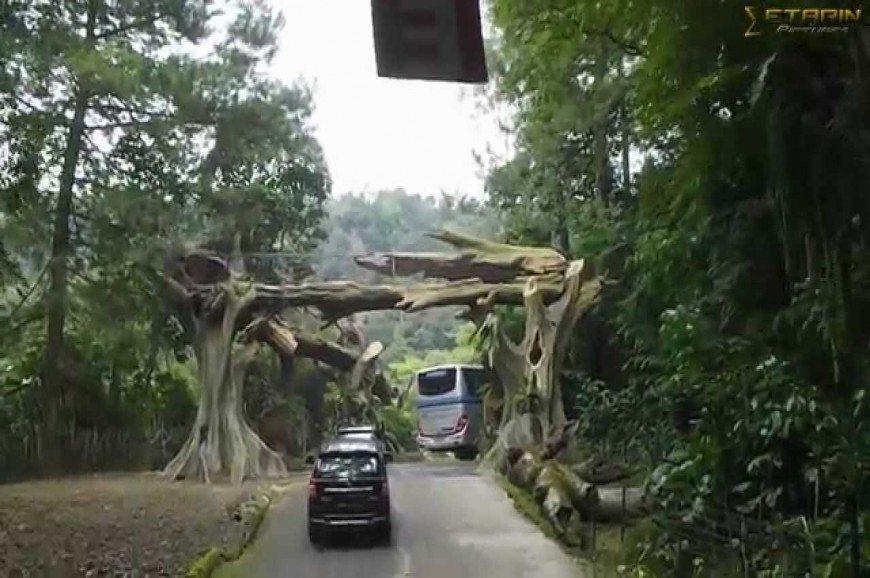حديقة سفاري بونشاك اندونيسيا