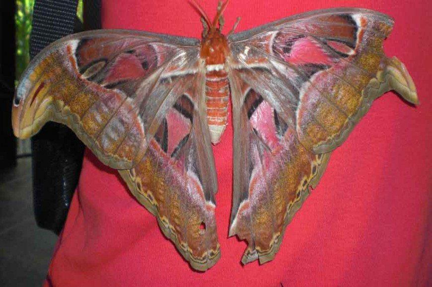 حديقة الفراشات في جزيرة بالي اندونيسيا