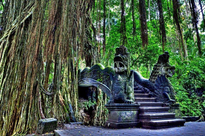 غابة أوبود للقرود بالي اندونيسيا