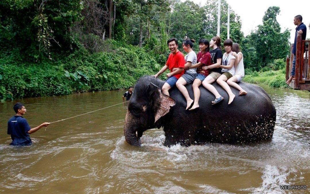 جولة محمية الفيلة اليتيمة ماليزيا