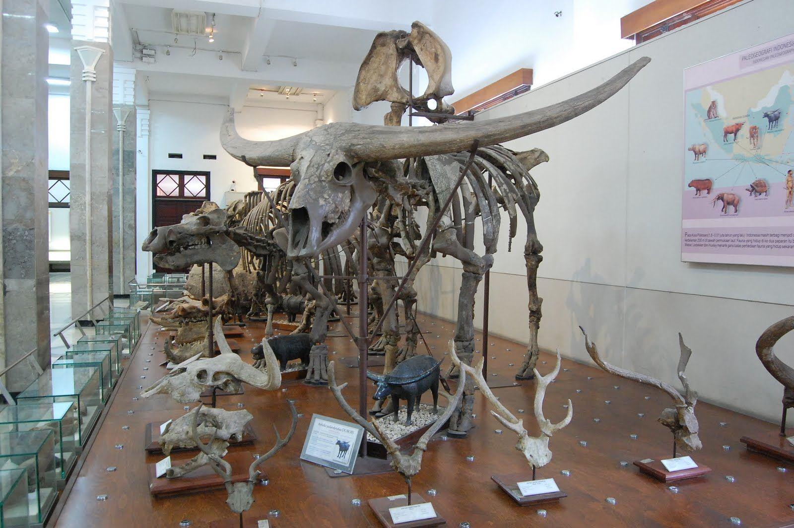 متحف الجيولوجيا في مدينة باندونج