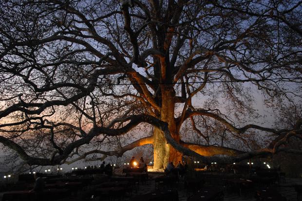 터키 증권 거래소의 역사적 나무