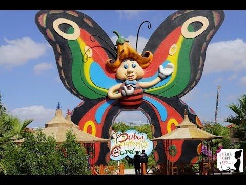فعالیت در پروانه پروانه دبی امارات متحده عربی