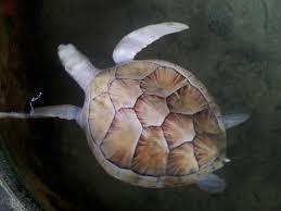 محمية السلاحف في بنتوته