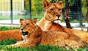 أفضل أنشطة في حديقة الحيوانات في اسطنبول
