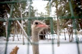أنشطة في حديقة حيوانات سامسون في تركيا