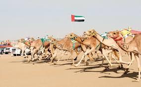 سباق الهجن في الإمارات