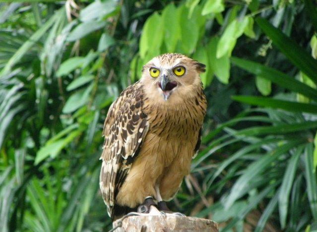 أفضل 10 انشطة في منتزه يورونغ للطيور سنغافورة