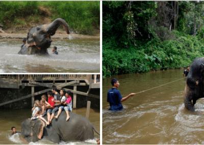 kuala gandah elephant sanctuary