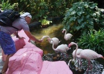 رسوم الدخول لحديقة الحياة البرية