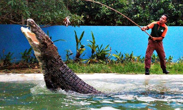 أفضل 7 أنشطة في حديقة الحياة البرية لنكاوي ماليزيا