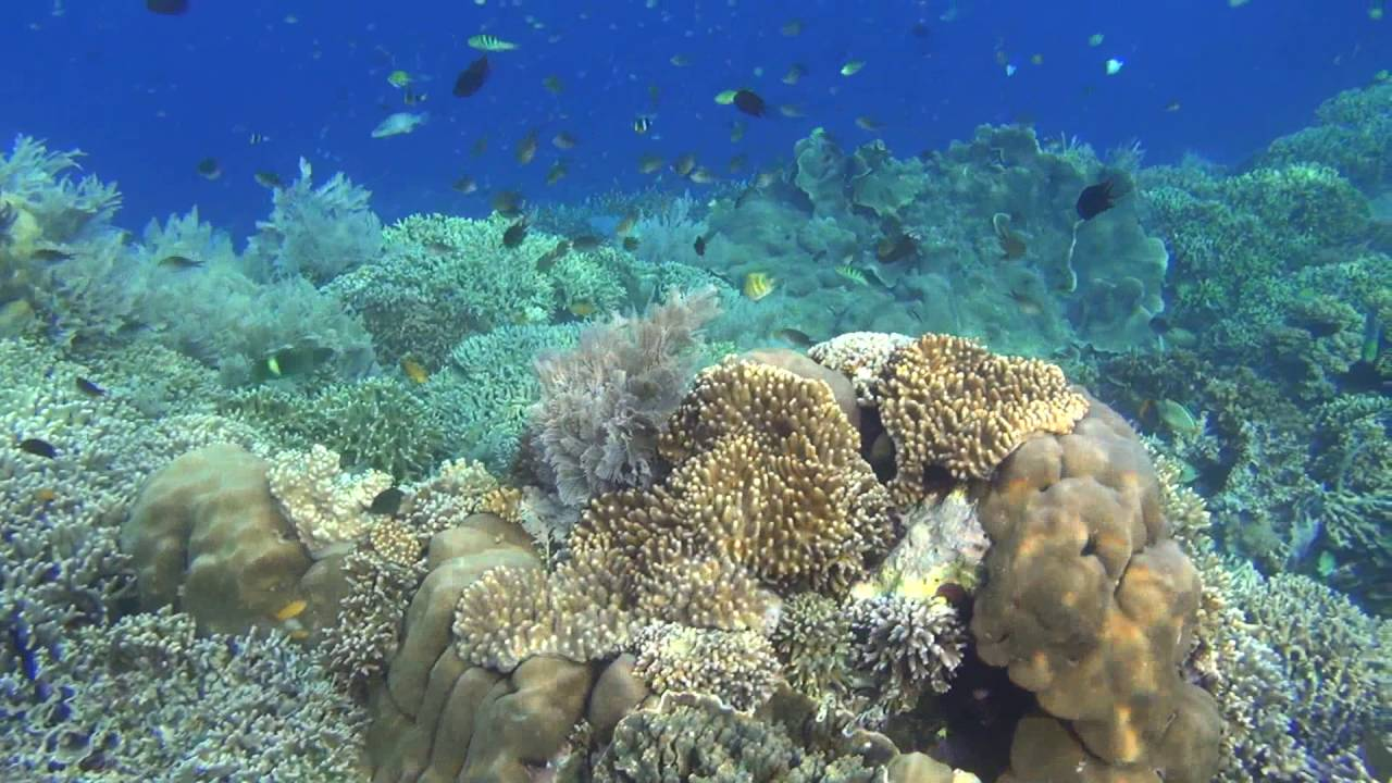 افضل وجهات الغطس جزيرة بوناكن اندونيسيا