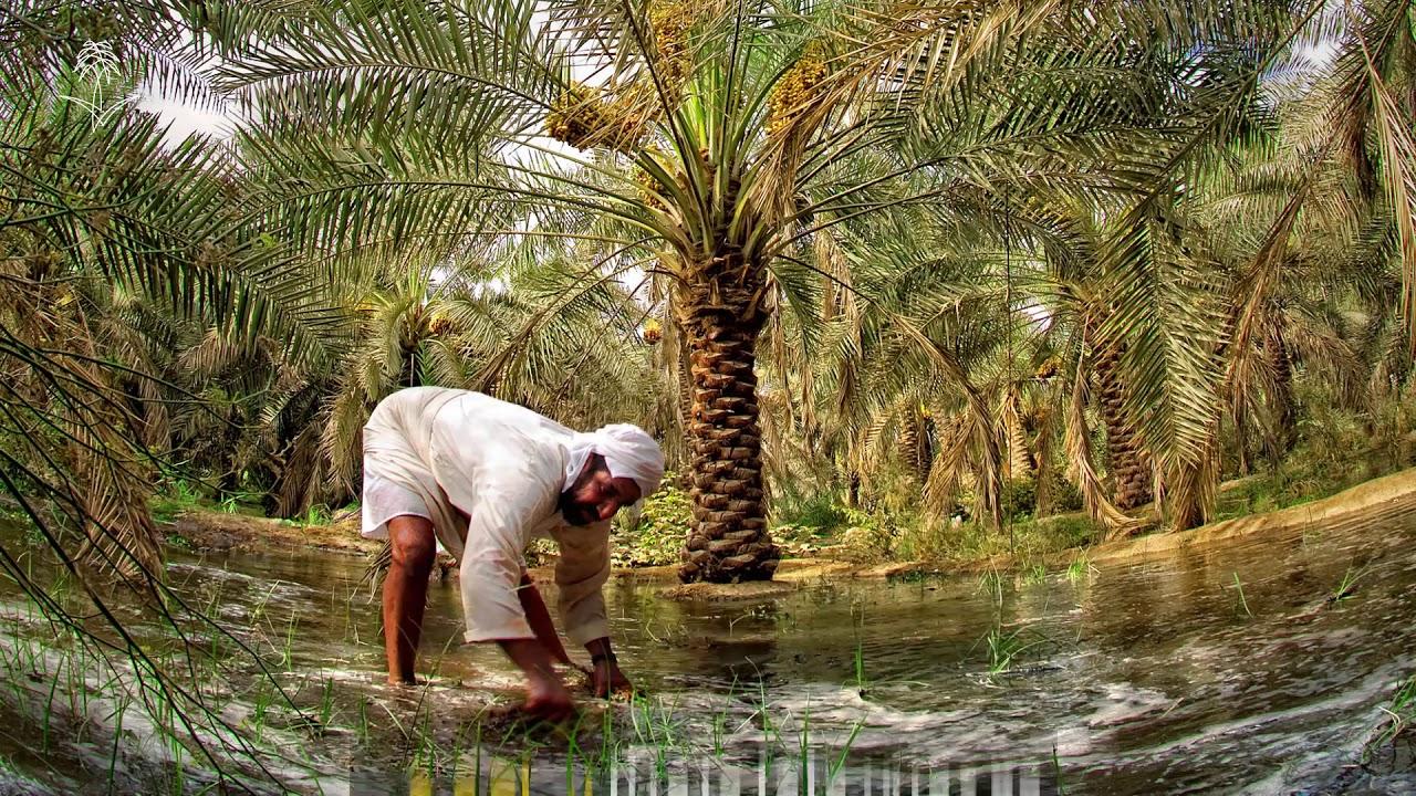 اهم الانشطة السياحية فى واحة الاحساء فى السعودية | اكبر واحه نخيل فى السعودية