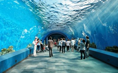جولة سياحية في عالم ما تحت الماء
