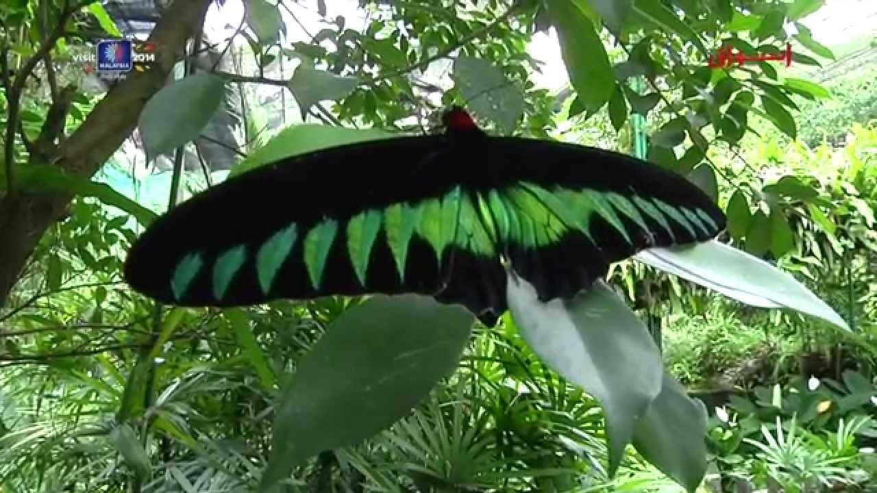 أجمل وأفضل الحدائق الوطنية في ماليزيا