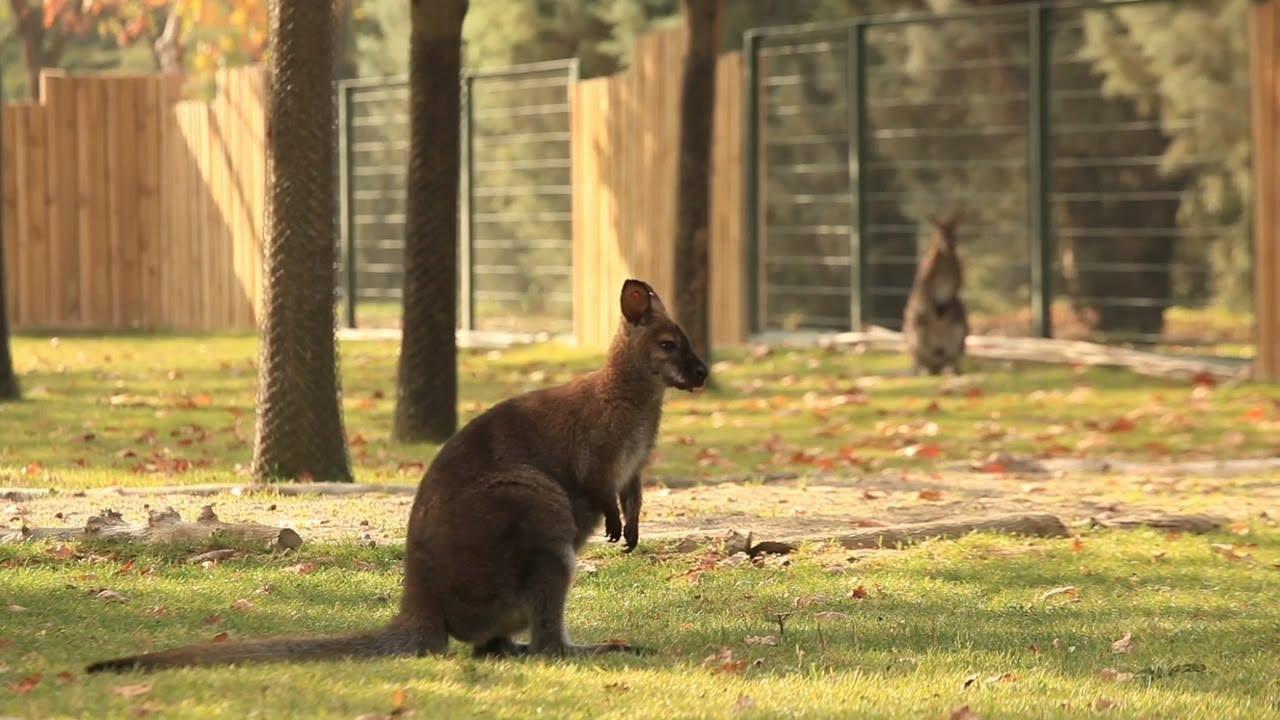 أفضل أنشطة في حديقة حيوانات بورصة تركيا