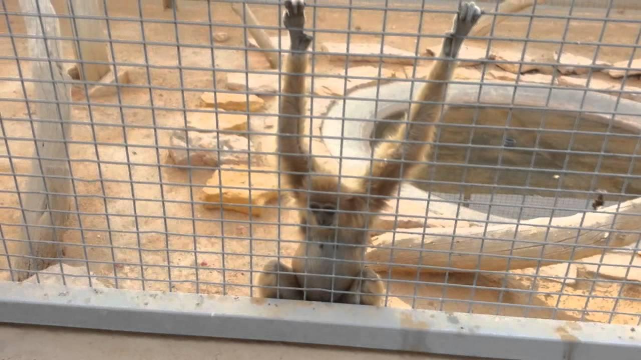 أنشطة في حديقة الحيوان في الرياض السعودية