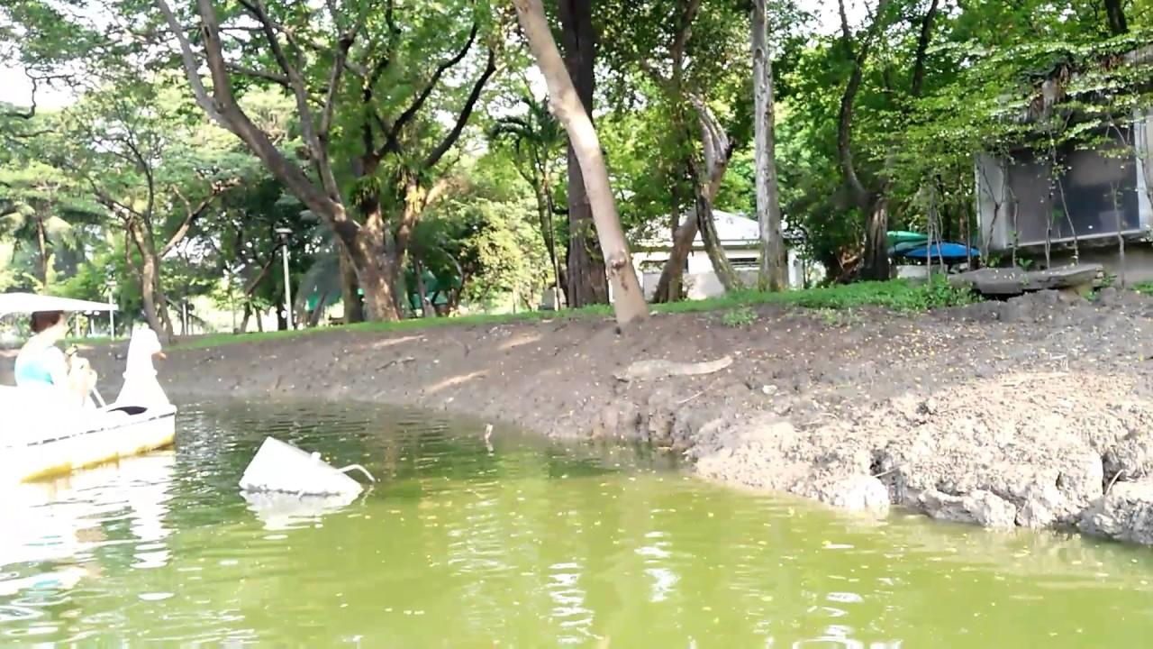 اهم الانشطة فى حديقه لومبيني بارك بانكوك