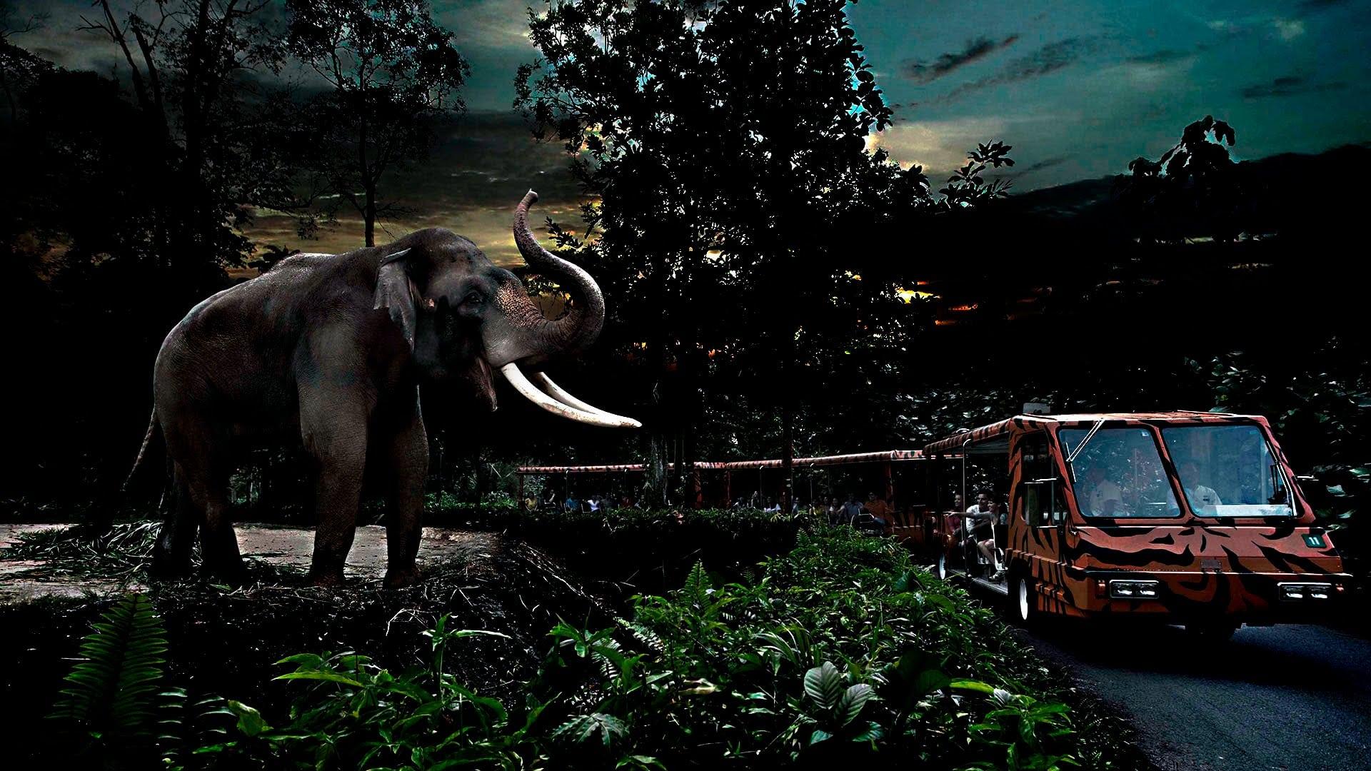 حديقة نايت سفارى سنغافورة