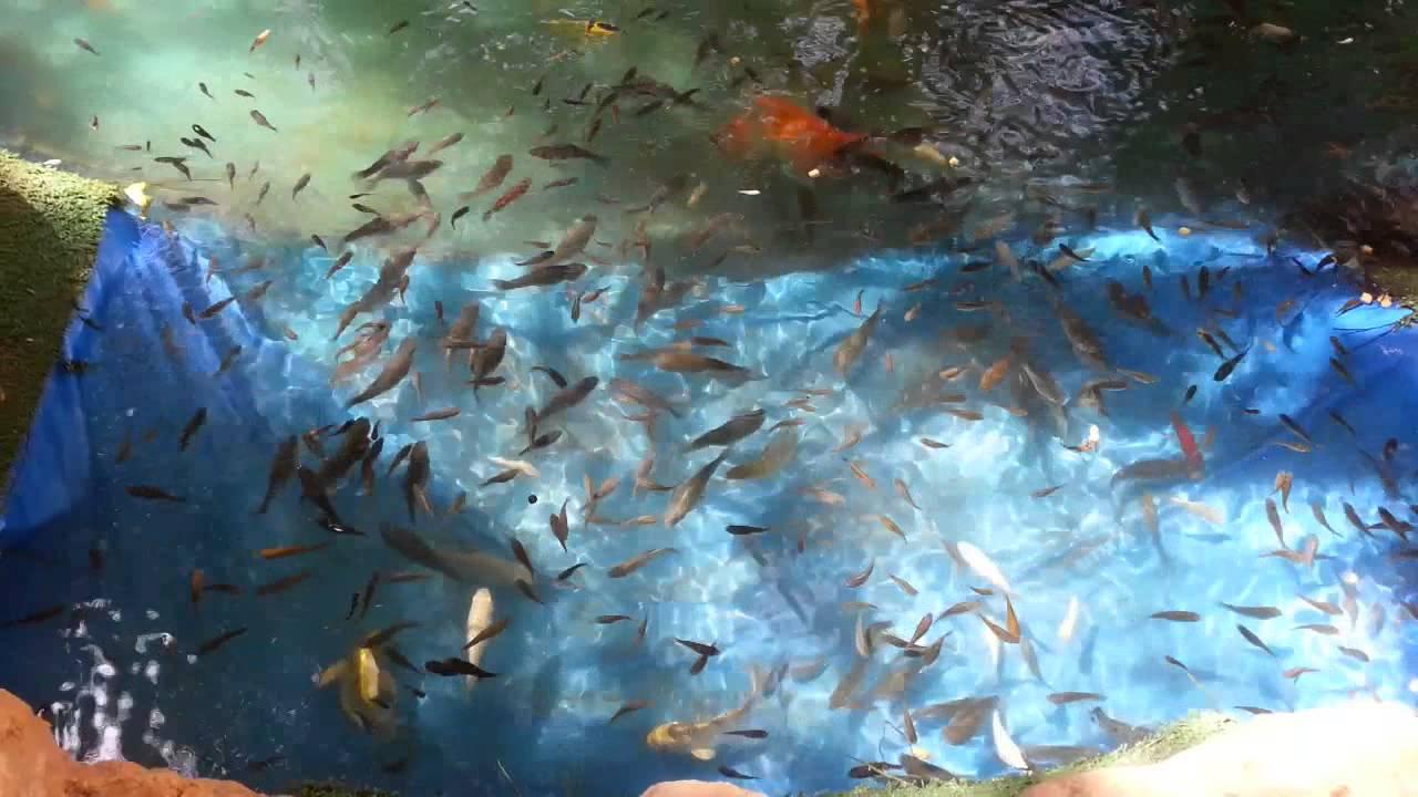 حديقة الأسماك مصر